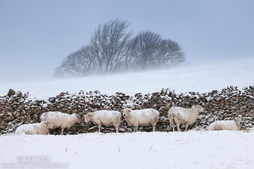 Sheep shelter