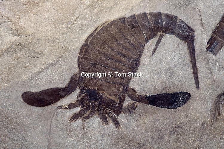 Dinosaur Fossil Locations  EnchantedLearningcom