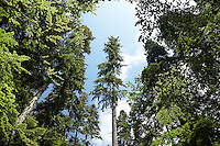 FOREST_LOCATION_90108
