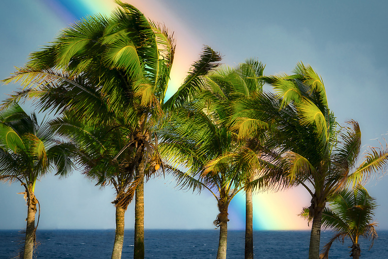 Palm trees and rainbow, Puna District, Hawaii