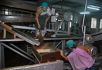 INDIA (West Bengal - Darjeeling) June 2007, Women at work at tea cleaning and sorting room at Makaibari Tea Factory.  Makaibari produces the most expensive tea in the world. They produce the tea organically (without using any fertilizers or spraying pesticides)through permaculture.  Makaibari is situated at the misty foot hills of Darjeeling Himalayas - Arindam Mukherjee