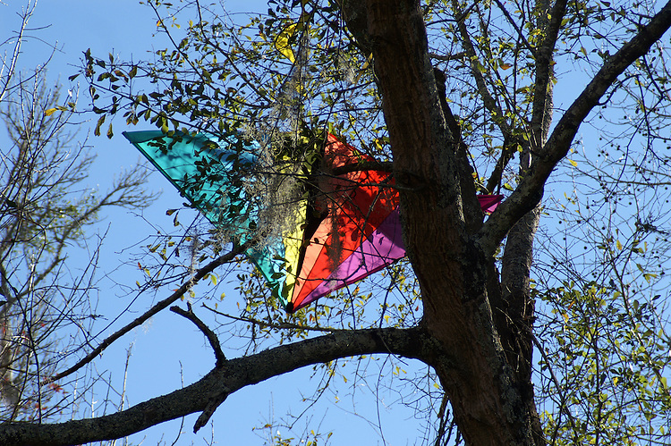 A freshly caught kite rests in a tree.