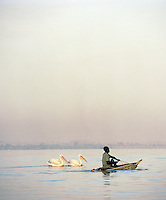 Fisherman being followed by pelican birds, Lake Tana, North West Ethiopia