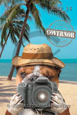 Samantha, ANIMALS,  photos,+dogs,++++Bulldog Tourist master,AUKP16,#A# Humor, lustig, divertido