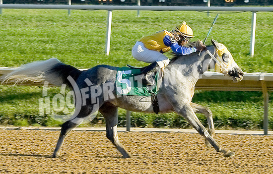 MD Sterling Silver winning at Delaware Park on 10/22/12