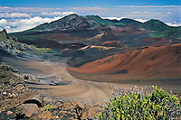 The hardy Kupaoa plant accents the classic view of the crater in HALEAKALA NATIONAL PARK on Maui in Hawaii