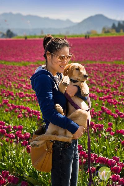 Roozengaarde Tulip Bulb farm, Mount Vernon, WA. Woman with dog