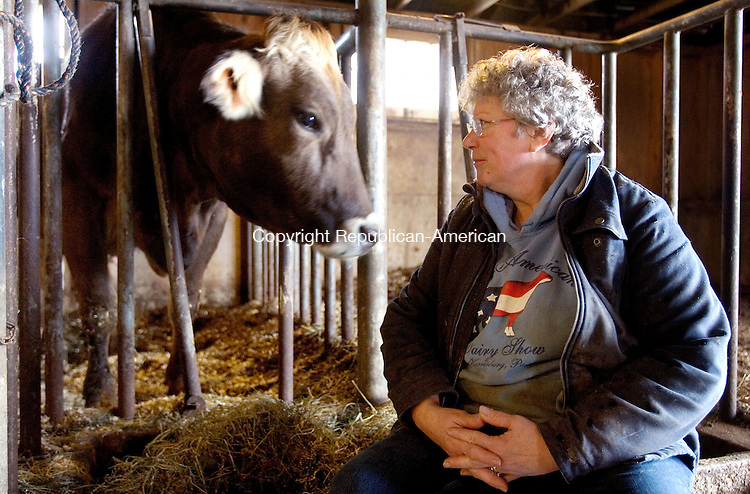 WARREN CT. 18 January 2014-011814SV01-Cindy Longo of Tanner Farm sits with one of her dairy cows at her farm in Warren Saturday.<br /> Steven Valenti Republican-American