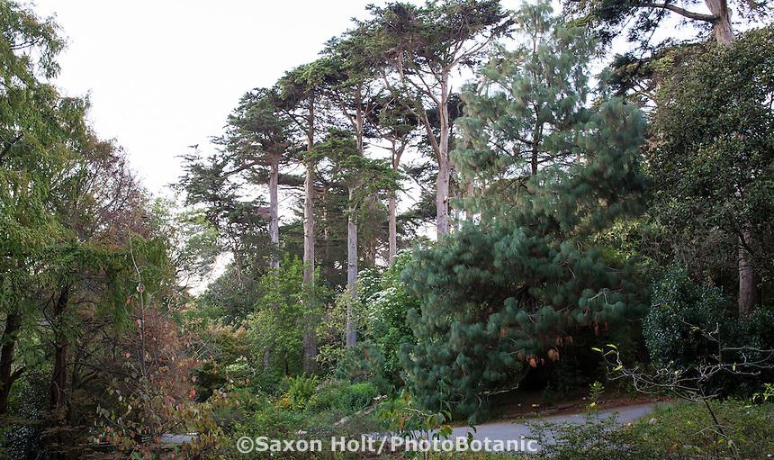 Mesoamerican Cloud Forest - San Francisco Botanical Garden