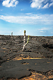 GALAPAGOS ISLANDS, ECUADOR, scenery seen while exploring around around Punta Moreno on Isabela Island