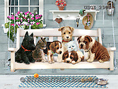 GIORDANO, CUTE ANIMALS, LUSTIGE TIERE, ANIMALITOS DIVERTIDOS, paintings+++++,USGI2906,#AC# ,dogs