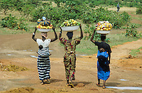 Farmer going to the market for sell their  fruits