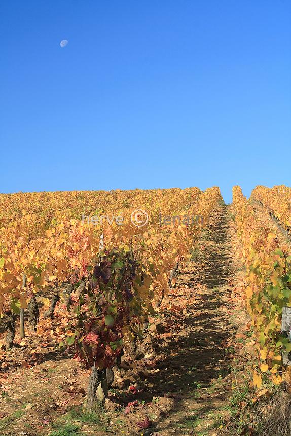 France, Cher (18), Morogues, vignoble AOC Menetou-Salon en automne // France, Cher, Morogues, the vineyard AOC Menetou Salon fall