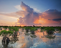 Everglades National Park with Red Mangroves