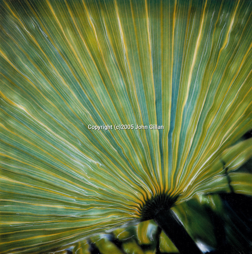 Close up graphic detail of palm tree leaf.