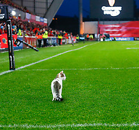9th November 2019; Thomond Park, Limerick, Munster, Ireland; Guinness Pro 14 Rugby, Munster versus Ulster; A cat tries to invade the pitch - Editorial Use