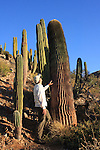 man and giant barrel cacti, Santa Catalina Island
