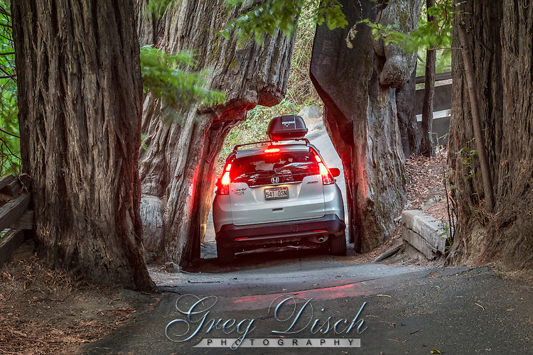 One of three drive through trees in the Redwoods National Park, located in Myers Flat.  The Avenue of the Giants is a 32 mile scenic drive through the heart of Humboldt Redwoods State park, among thousands of acres of coast redwoods, including the largest remaining old-growth coast redwood forest in the world.