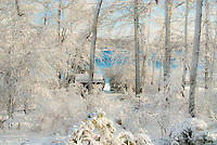 Winter snow on backyard with woodland trees and lake water on sunny December day