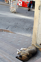 A midget and a dog.