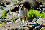 Nice medium size family dog at the river with shallow depth of field