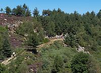 Apiary on the heath near Villefort in Loz&egrave;re. Beekeeper Pierre de la Rue de Can, Miellerie de Vielvic.<br /> Rucher sur la bruy&egrave;re callune pr&egrave;s de Villefort en Loz&egrave;re. Apiculteur, Pierre de la Rue de Can, Miellerie de Vielvic. Fr