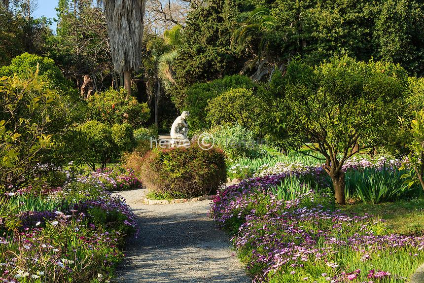 France, Alpes-Maritimes (06), Saint-Jean-Cap-Ferrat, le jardin botanique des C&egrave;dres:<br /> all&eacute;e bord&eacute;e d'Osteospermum entre la collection de Citrus.