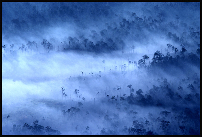 Aerial of rain forest in Borneo