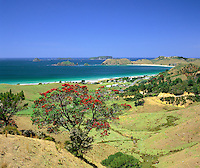 New Zealand, North Island, Coromandel Peninsula: View over Opito Bay with Pohutukawa Tree in foreground | Neuseeland, Nordinsel, Coromandel Halbinsel: Opito Bay mit Pohutukawa Tree im Vordergrund
