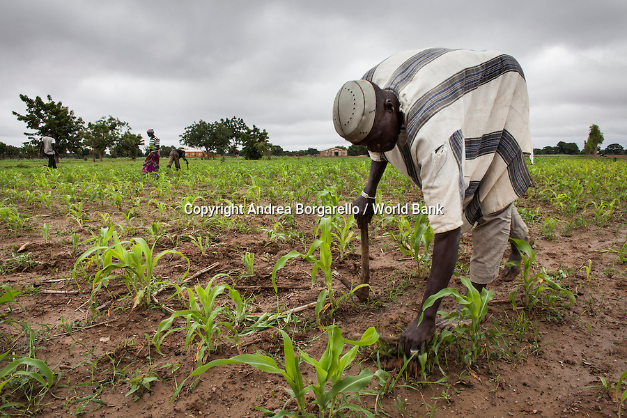 Burkina Faso, Plateau Central. The Programme National de Gestion des Terroirs (PNGT) supports a growth in the agricultural production with the aim of reducing the land degradation.