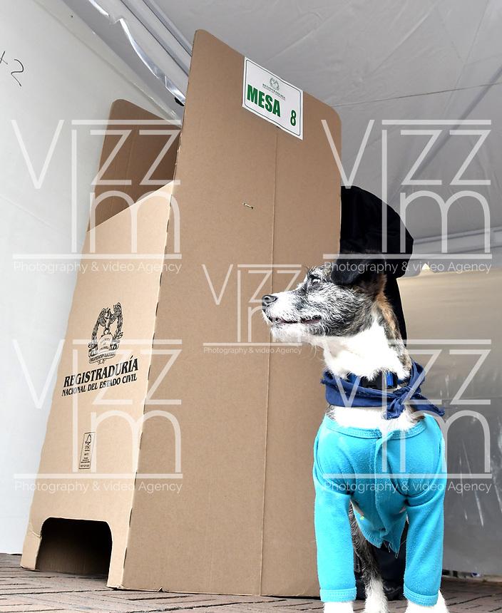 BOGOTÁ – COLOMBIA, 27-05-2018: Un perro aguarda a su amo mientras vota en la Plaza de Bolívar, durante la jornada de elecciones Presidenciales para el periodo 2018-2022. / A dog waits for its master while voting in the Plaza de Bolívar, during the presidential election day for the period 2018-2022. Photo: VizzorImage/ Luis Ramirez / Staff.