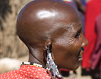 The traditional shaved head of a Masai woman and the traditional ornate beaded earrings and necklaces. A village near the Serengeti National Park, Tanzania.
