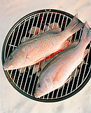 USA, Florida, Red Snapper fish on grill, close-up, Islamorada