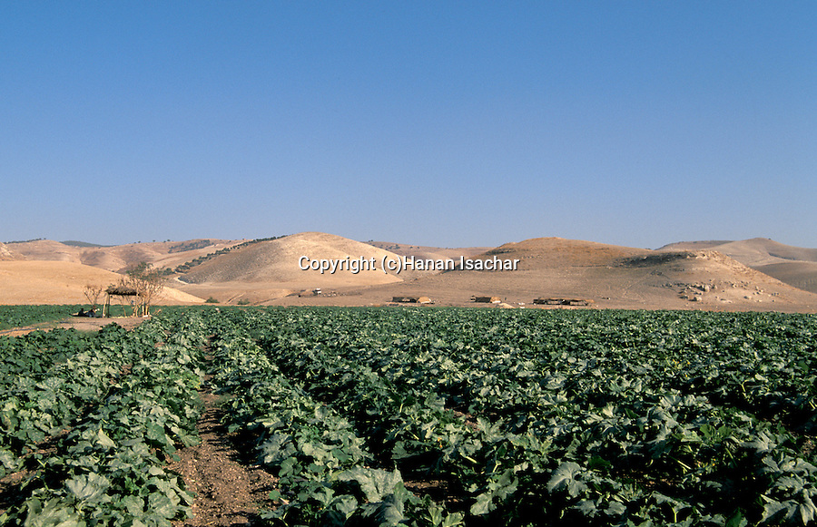 jordan valley agriculture