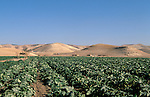Jordan, agriculture in the Jordan Valley<br />
