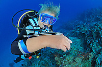 Echeneis naucrates, Gestreifter Schiffshalter auf Arm von Taucherin, Live sharksucker on arm of scuba diver,  Pemuteran, Bali, Indonesien, Asien, Indopazifik, Indonesia, Indo-Pacific Ocean, Asia