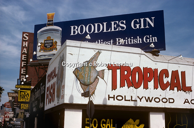 Tropical Fish Shop, Hollywood,1979