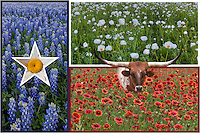 Using the state flag of Texas, this collage of wildflowers uses shots I've taken over the past several springs, from bluebonnets to firewheels. Springtime in Texas is nice.