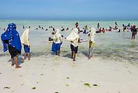 TANZANIA, Zanzibar, Paje, beach, Zanzibari children bathing at the beach during low tide / TANSANIA, Sansibar, Paje, Kinder am Strand Strand