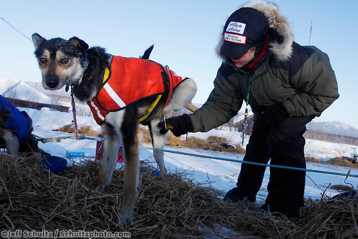 """Saturday  March 13 , 2010  Maureen Chrysler, a member of the canine drug testing team -- affectionatley known as the """"P-team""""  gets a urine sample from """"Spit"""" one of Bill Pinkham's dogs at the village checkpoint of Ruby"""