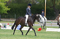 Champion Pony 12.2-14HH