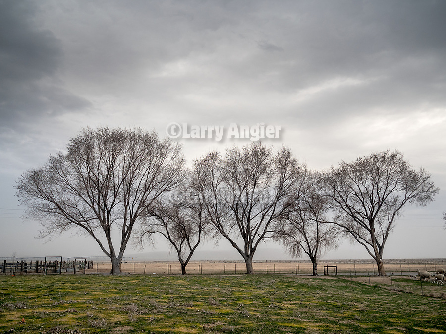 Threatening  sky and bare trees, Dufurrena Ranch, Humboldt County, Nev.