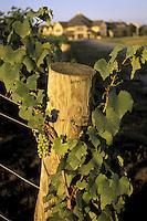 Niagara-on-the-Lake Winery & Vineyard