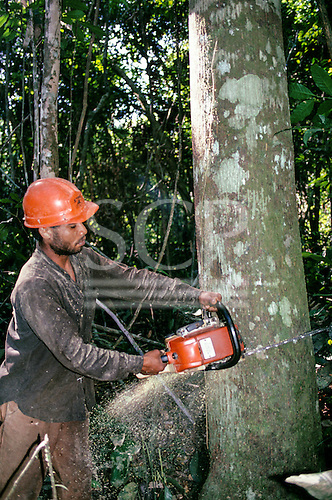 Mato Grosso, Amazon, Brazil. Logger felling timber in the rainforest with a chainsaw.