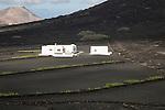 Grapevines growing in black volcanic soil white farm building, La Geria, Lanzarote, Canary Islands, Spain