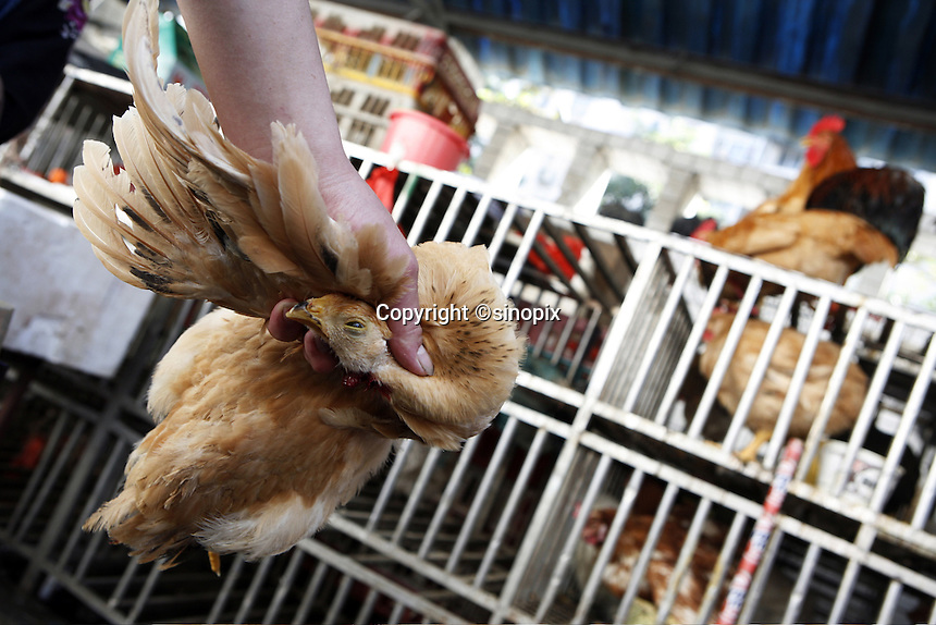 A chicken with its throat slit drips blood on the floor of the Futian agriculture and produce market in Shenzhen.<br />