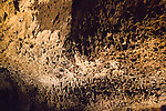 Lava stalactites on cave roof, Cueva de Los Verdes, cave tourist attraction in lava pipe tunnel, Lanzarote, Canary Islands, Spain
