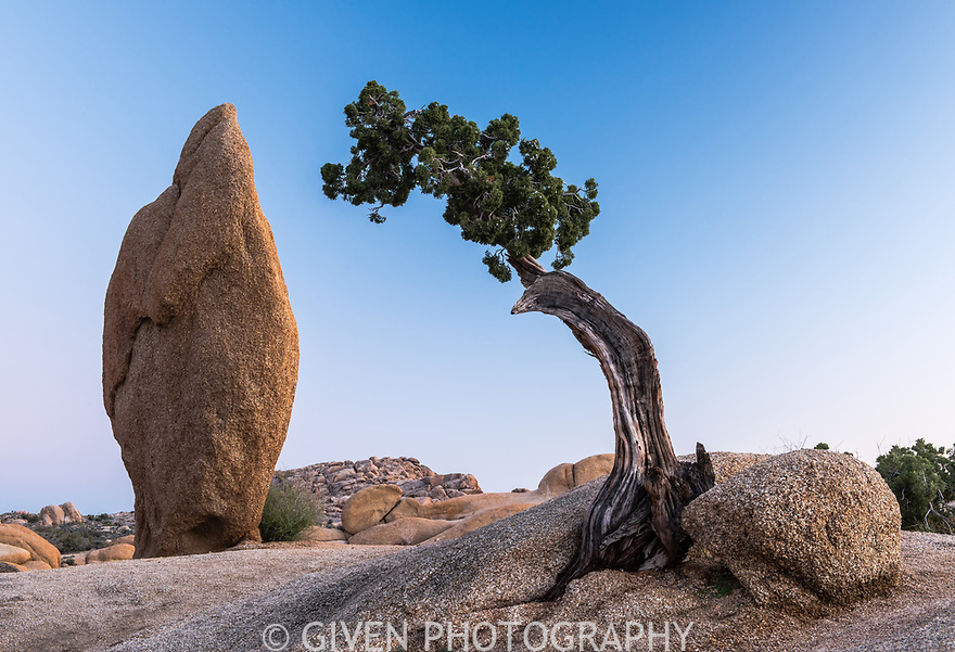 California Juniper and Granite, Joshua Tree National Park, California