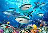Howard, REALISTIC ANIMALS, REALISTISCHE TIERE, ANIMALES REALISTICOS, paintings,+sharks,++++,GBHR878,#A# ,puzzles