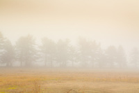 Early morning fog reveals a row of trees silhouetted in the meadow